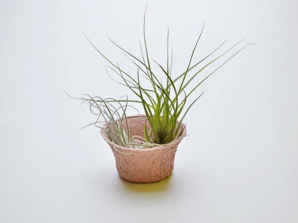 植木鉢一例